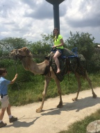 Camel Riding, Crab Legs, and Cradling a Kangaroo (Just A Bucket List Month)!