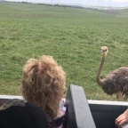 The Wilds: A WILD Ride with a Stalker Ostrich!